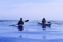 Ocean Kayakers