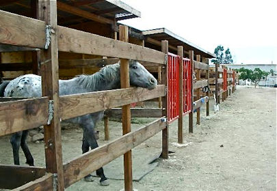 All the Pretty Horses Baja