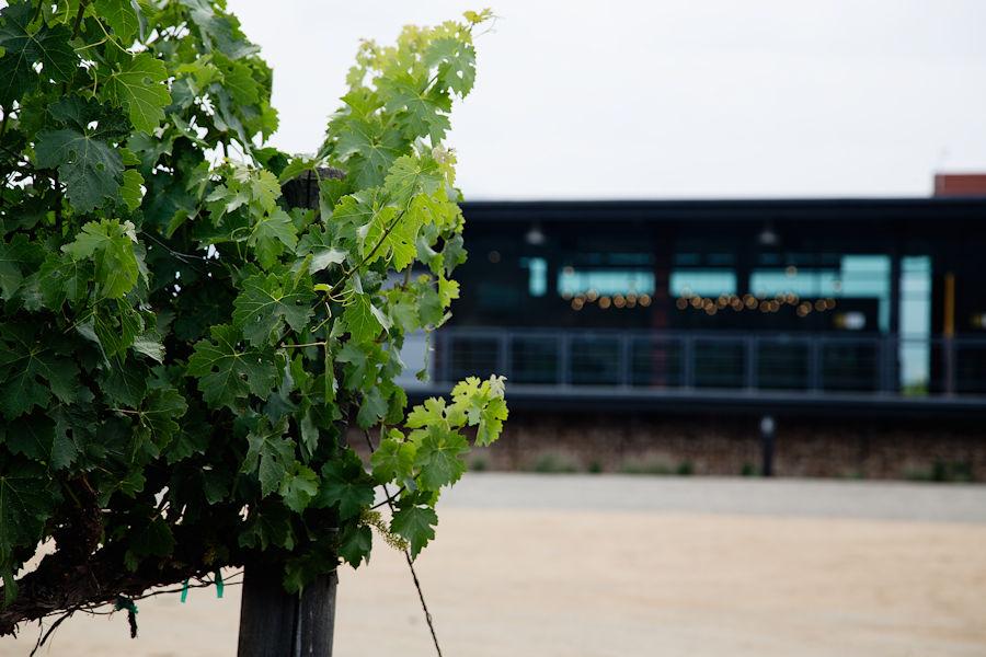 Emeve Winery