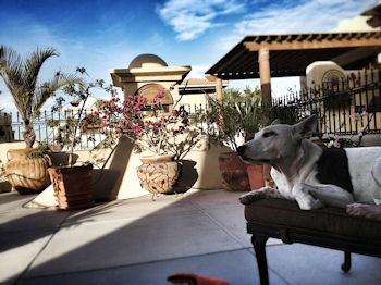Minka Baja Dog