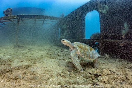 Sea Turtle Baja Sur
