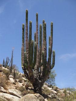 Catavina Baja