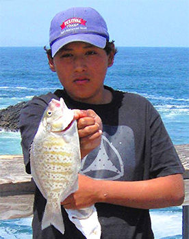barred surfperch