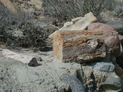 Two Petrified Logs In El Rosario