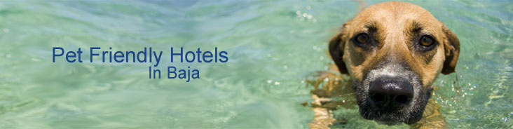 Baja Hotel Guide - Pet Friendly - Baja Hotel Guide