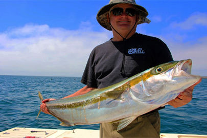 Baja Fishing - San Quintin Yellowtail
